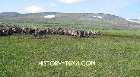 тундра - как живут местные аборигены