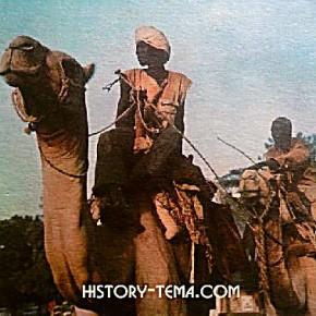 верблюды настоящей Африки