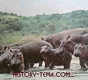 фотографии животных настоящей Африки