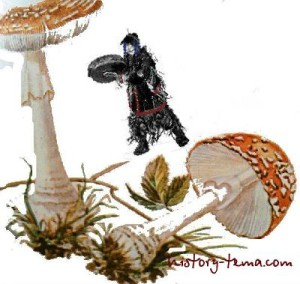 использование грибов человеком