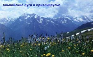 какой климат высоко в горах кавказа