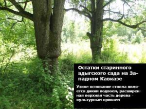 где на кавказе находятся районы садоводства
