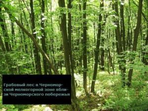 какие леса на кавказе