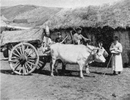 каков был быт народов кавказа
