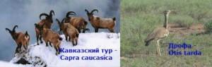 насколько разнообразен животный мир кавказа
