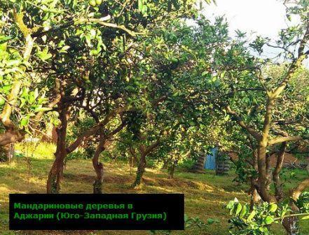 какие теплолюбивые культуры выращивают на кавказе