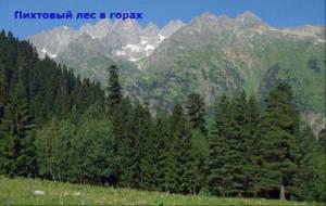 до какой высоты в горах кавказа растут леса
