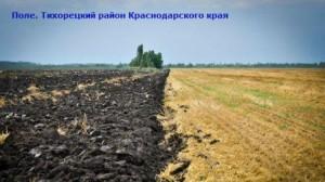 где на кавказе больше всего выращивают хлеб