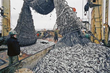 где на кавказе ловят рыбу