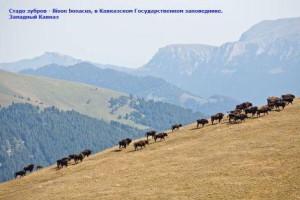 какое животное самое крупное на кавказе