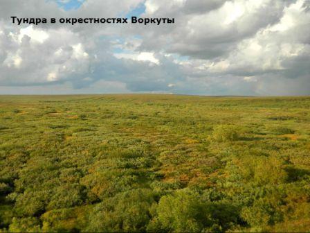 Какие природные зоны есть в Коми и какой в Коми климат