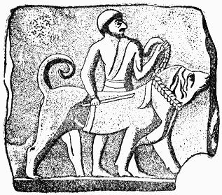 как собак использовали в древности