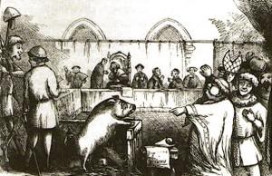 за что в европе казнили свиней
