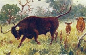 откуда произошли домашние коровы