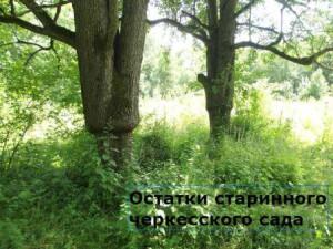 кавказская война что делали российские войска на кавказе