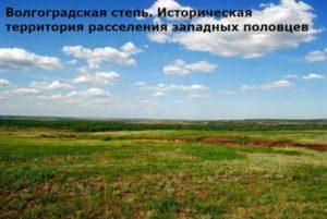 с кем монголы воевали кроме руси