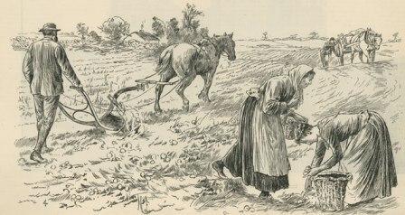 как картофель помог европе