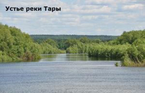 как русские начали осваивать сибирь как в сибири появилась первая царская администрация