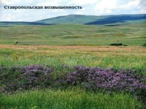 Что такое Ставропольская возвышенность