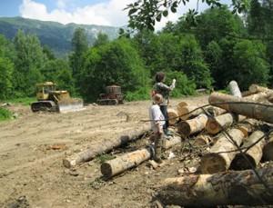 есть ли хозяйственный лес на кавказе