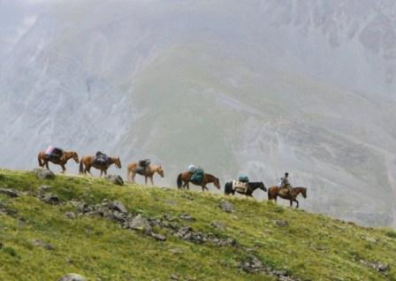 зачем сейчас нужны лошади