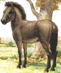 откуда произошли лошади