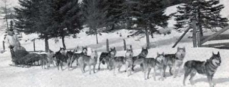 для чего используют собак на севере