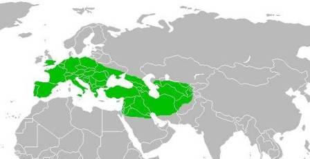 в каких странах жили неандертальцы