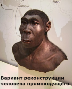 кто такой человек прямоходящий homo erectus