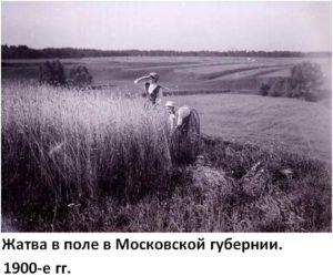 о чем николай вавилов писал дипломную работу
